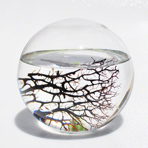 Large EcoSphere Closed Aquatic Ecosystem